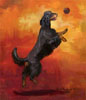 Gordon Setter Catch